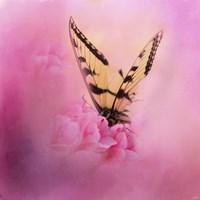 Butterfly On The Azaleas Fine-Art Print