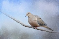 Dove In The Snow Fine-Art Print