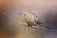 Mourning Dove On A Winter Evening Fine-Art Print