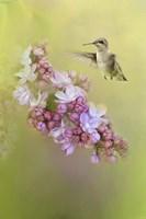 Chasing Lilacs Fine-Art Print