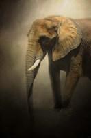 The Elephant Emerges Fine-Art Print