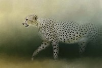 Cheetah On The Prowl Fine-Art Print