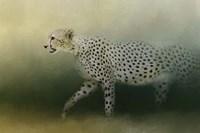Cheetah On The Prowl Fine-Art Print