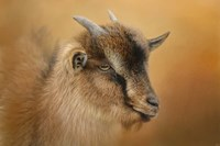 Portrait Of A Nubian Dwarf Goat Fine-Art Print