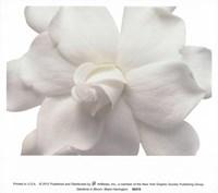 Gardenia In Bloom Fine-Art Print