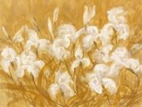 Irises II Fine-Art Print