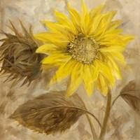 Sunflower III Fine-Art Print