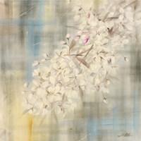 White Cherry Blossom II Fine-Art Print