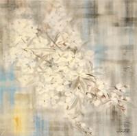 White Cherry Blossom III Fine-Art Print