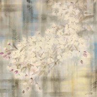 White Cherry Blossom IV Fine-Art Print