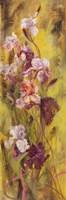 Bearded Iris II Fine-Art Print