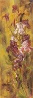 Bearded Iris III Fine-Art Print