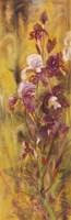 Bearded Iris IV Fine-Art Print