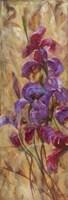 Bearded Iris V Fine-Art Print