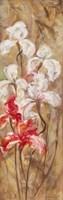 Bearded Iris VI Fine-Art Print