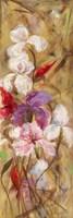 Bearded Iris VIII Fine-Art Print