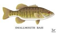 Smallmouth Bass Fine-Art Print