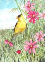 Yellow Finch Cosmos Fine-Art Print