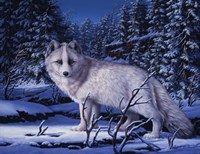 Blue Northern Fine-Art Print