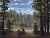White Tail Family Fine-Art Print