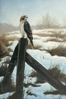 Hawk Eye Fine-Art Print
