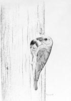Bluebird Study Fine-Art Print