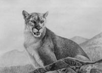 Cougar Study Fine-Art Print