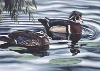 Pair of Ducks Fine-Art Print