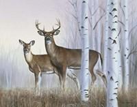 Deer In Birch Woods Fine-Art Print