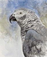 Bird - Head Study Fine-Art Print
