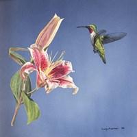 Hummingbird And Lily Fine-Art Print