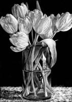 Nine Tulips Fine-Art Print