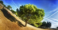 Summer Tree Fine-Art Print