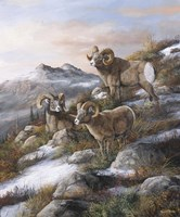 High Country Kings Fine-Art Print