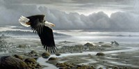 Lowtide - Bald Eagle Fine-Art Print