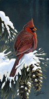 Winter Cardinal Fine-Art Print