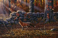 Autumn Reds - Red Fox Fine-Art Print