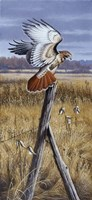 The Corner Post - Red Tailed Hawk Fine-Art Print