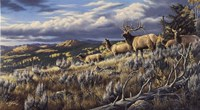 King Of The Hill - Elk Fine-Art Print