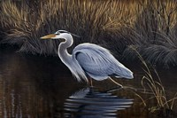 Making Strides - Great Blue Heron Fine-Art Print