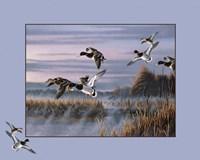 Ducks In Flight 1 Fine-Art Print