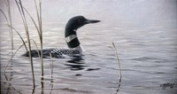 Emerging Loon Fine-Art Print