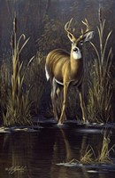 Whitetail Buck Fine-Art Print