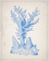 Blue Coral 1 Fine-Art Print