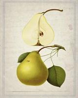 Pears 2 Fine-Art Print
