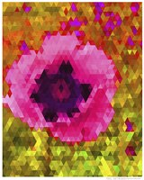 Pink Poppy Fine-Art Print