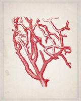 Red Coral 2 Fine-Art Print