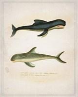Whale 2 Fine-Art Print