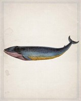 Whale 4 Fine-Art Print