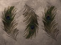 Peacock Feathers III Fine-Art Print